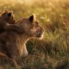 Thumbnail image for 43 versteckte Hintergrundbilder unter Mac OS X Mountain Lion